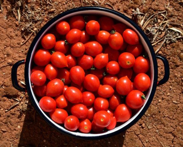 pomodori pericolo