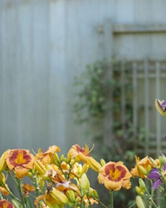 preventivi giardino